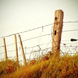 fence-336645_640